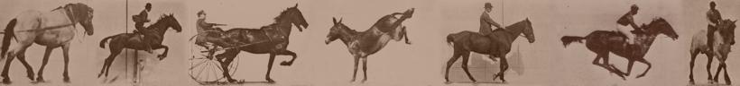 chronophotographies de Muybridge