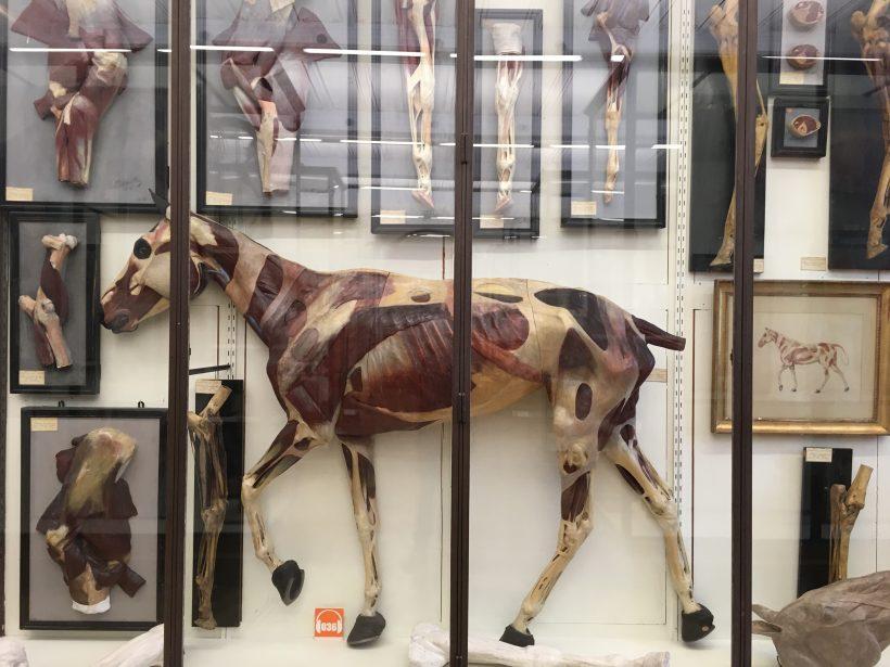 Musée Fragonard — Enva