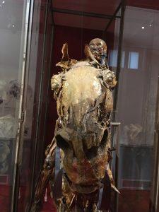 Cavalier écorché de Fragonard