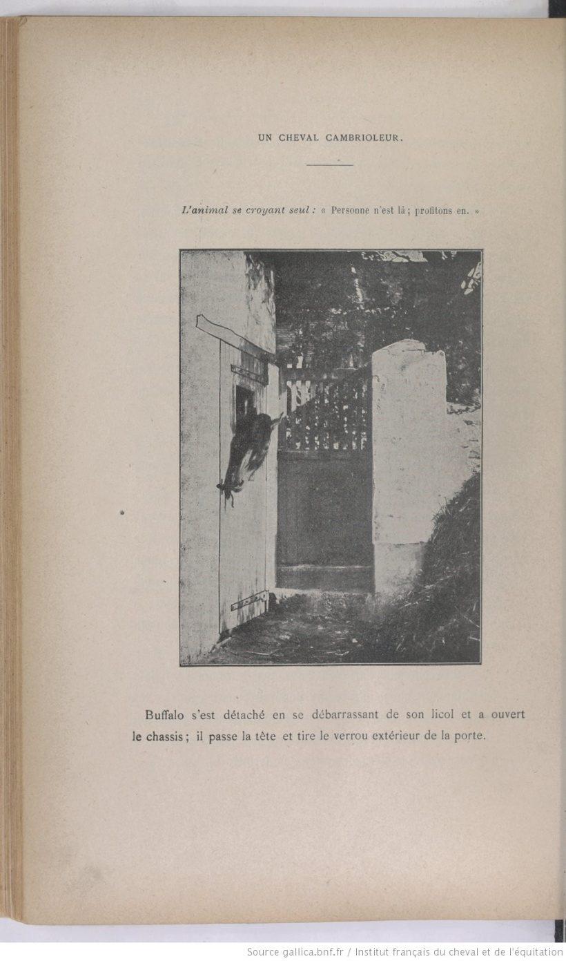 Adolphe Guenon - l'Âme du cheval - 1901
