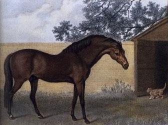 Godolphin_Arabian_Stubb — 1792
