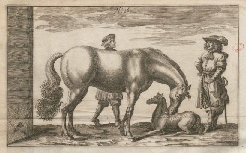 Traité nouveau et augmenté de George Simon Winter de Adlersflügel pour faire Race de Chevaux — 1703