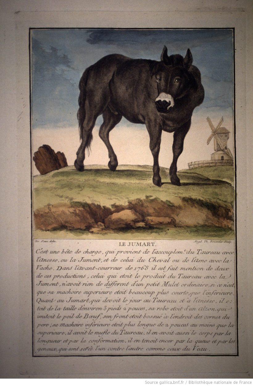 Histoire générale des animaux, des végétaux et des minéraux.