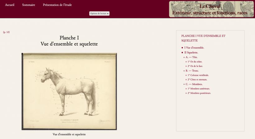 Le cheval. Extérieur, structure et fonctions, races — 1886