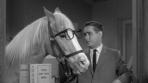 Série télé, Mr Ed, le cheval qui parle