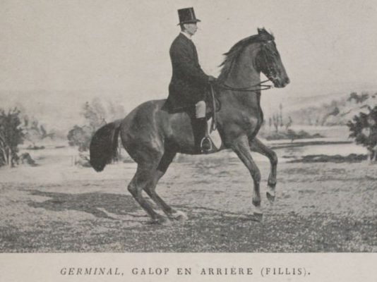 James Fillis sur Germinal au galop arrière