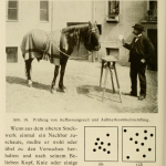 Karl Krall et ses chevaux savants